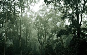 Les changements du WHV suite aux incendies en Australie